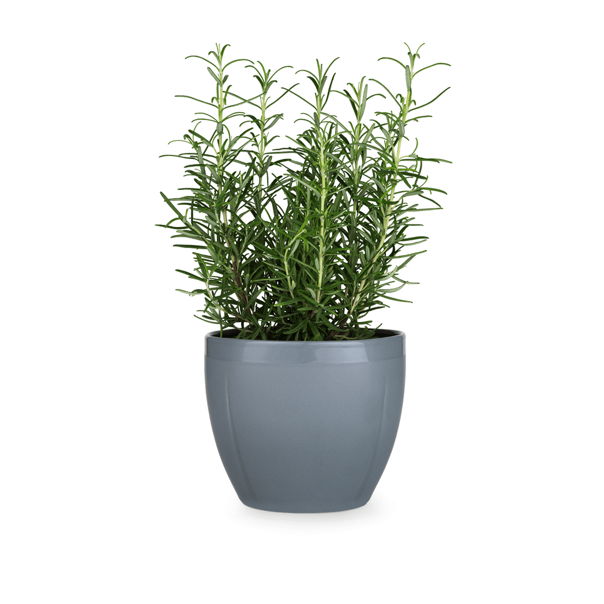 flower vase on wall with Gc Flowerpot Oe16 Cm Grey on Hawaiian Flowers Outline likewise Best Dried Flower Arrangements A Colorful Winter furthermore Decorate With Plants together with Flowrs4u blogspot furthermore Watch.