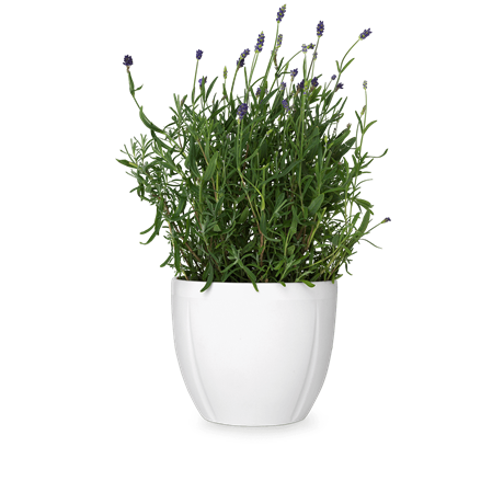 gc-flowerpot-oe17-white-grand-cru
